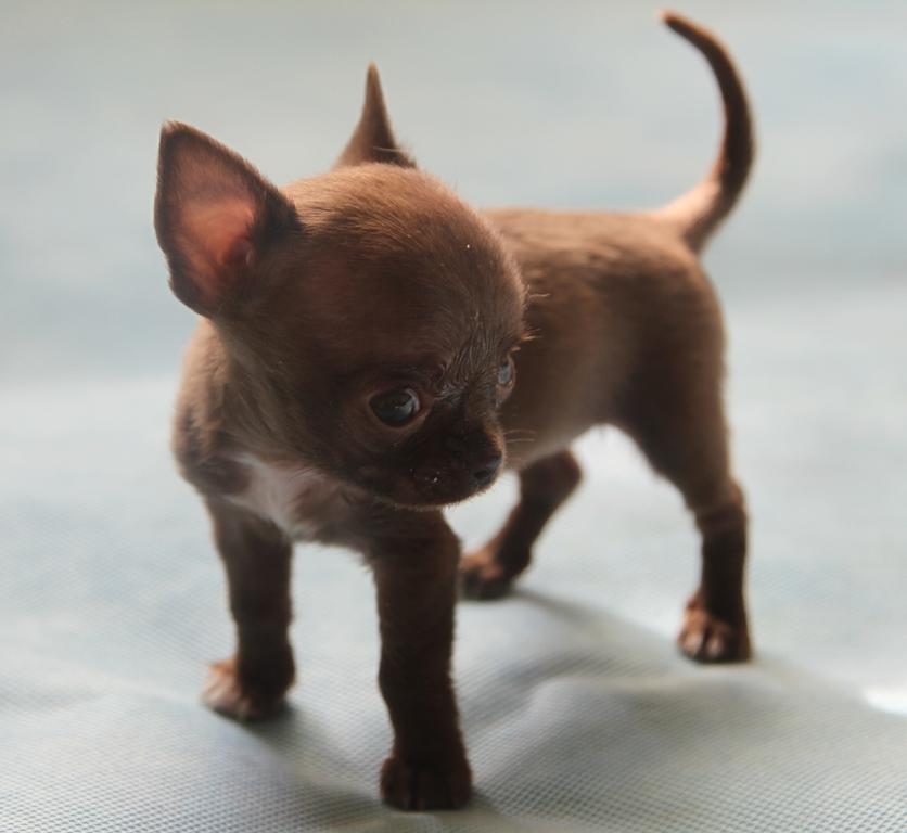NUTRAM (Канада) | Для щенков | Корма | СОБАКИ | Интернет